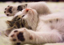 Kattpensionat erbjuder husrum när du är bortrest