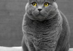 Undvik stressen vid veterinärbesöket